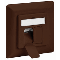 CAT6a Wall Plate Brown